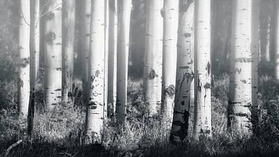 Photograph - Aspens In The Mist  by Saija Lehtonen