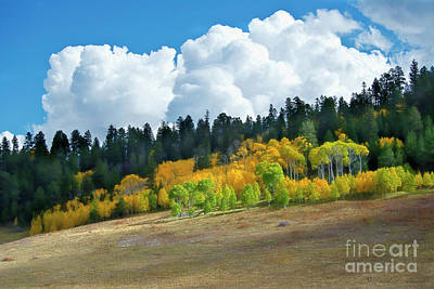 Photograph - Aspens In The Sun by David Arment
