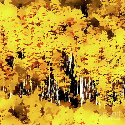 Digital Art - Aspens In The Sun by Tim Richards