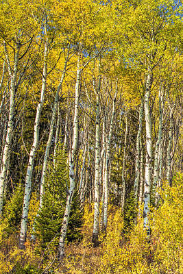Vertical Photograph - Aspens In The Tetons by Andrew Soundarajan
