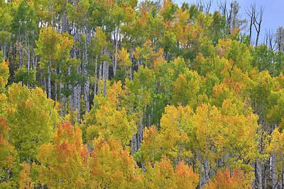 Photograph - Aspens In The Wind At Dallas Divide by Ray Mathis