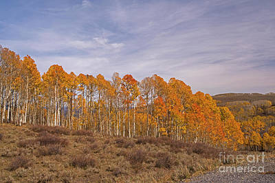 Photograph - Aspens In Utah by Cindy Murphy - NightVisions