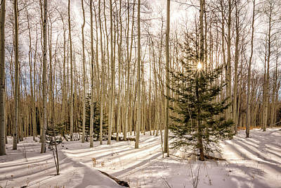 Photograph - Aspens In Winter 1 - Santa Fe National Forest New Mexico by Brian Harig