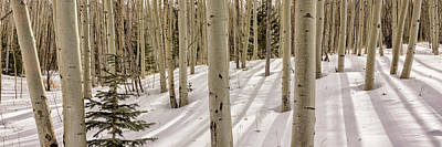 Photograph - Aspens In Winter 2 Panorama - Santa Fe National Forest New Mexico by Brian Harig