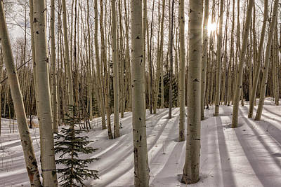 Photograph - Aspens In Winter 2 - Santa Fe National Forest New Mexico by Brian Harig