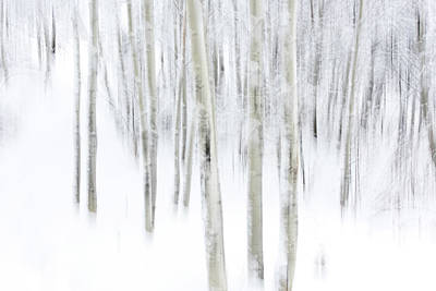 Artistic Portraiture Photograph - Aspens In Winter by Deborah DeKoff