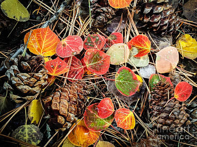 Photograph - Aspens Leaves And Pine Cones by Marianne Jensen