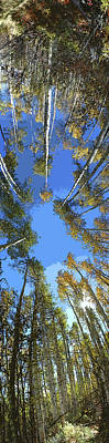 Photograph - Aspens Looking Up by Jeff Schomay
