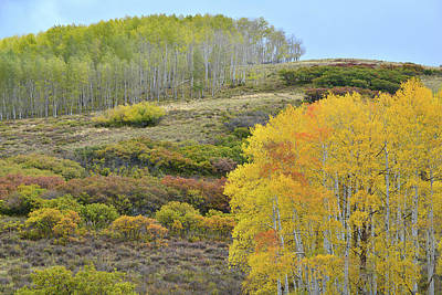 Photograph - Aspens Of A Different Color Along Last Dollar Road by Ray Mathis