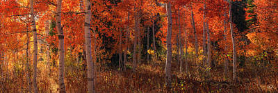 Red Photograph - Aspens Of Red And Yellow by Leland D Howard