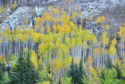 Photograph - Aspens Of Vail Colorado by Ray Mathis