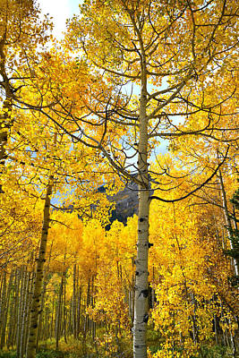 Photograph - Aspens On Ohio Pass by Ray Mathis