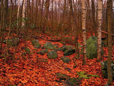 Photograph - Aspens On The Appalachian Trail by Raymond Salani III