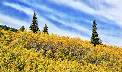 Photograph - Aspens On The Hillside by Carolyn Derstine