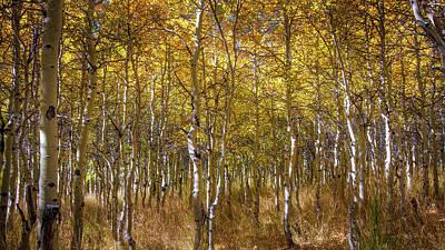 Aspen Fall Colors Photograph - Aspens  by Ralph Vazquez