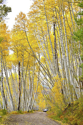Photograph - Aspens Tower Above High Country Road by Ray Mathis