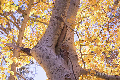 Photograph - Aspens  by Vincent Bonafede