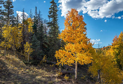 Photograph - Aspen Tree In Fall Colors San Juan Mountains, Colorado. by John Brink