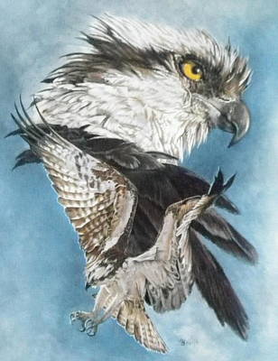 Osprey Mixed Media - Assail by Barbara Keith