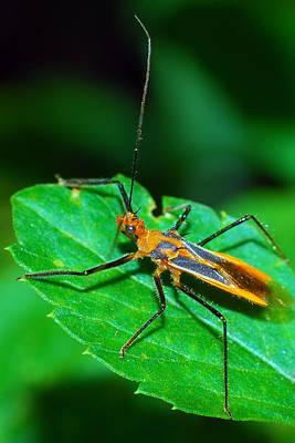 Photograph - Assassin Bug by Larah McElroy