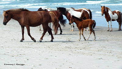 Photograph - Assateague 4 by Kimmary MacLean