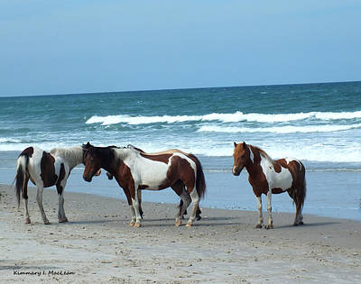 Photograph - Assateague 5 by Kimmary MacLean