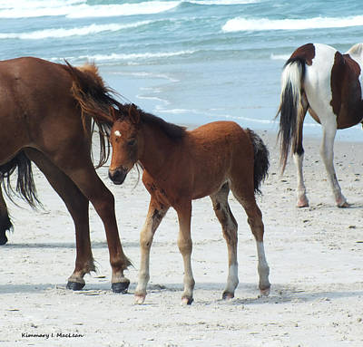 Photograph - Assateague Baby by Kimmary MacLean