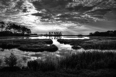 Photograph - Assateague In B/w by Ronda Ryan