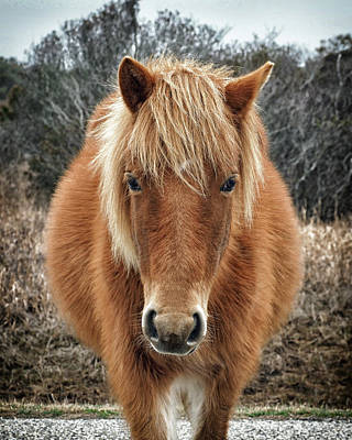 Photograph - Assateague Island Horse Miekes Noelani by Bill Swartwout