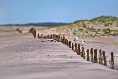 Photograph - Assateague Island by Rick Berk