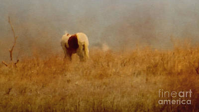 Photograph - Assateague Pony by Dawn Gari
