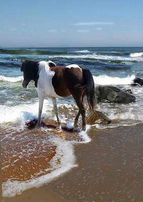 Photograph - Assateague Pony by Joyce Wasser