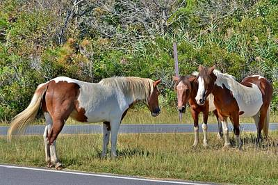 Photograph - Assateague Trio by Kim Bemis
