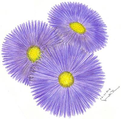 Aster Drawing - Aster Alpinus by James M Thomas