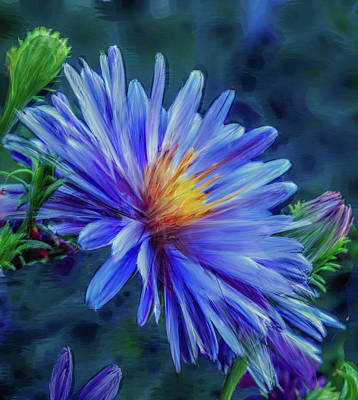 Digital Art - Aster Blue Painterly #h1 by Leif Sohlman