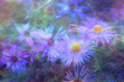 Photograph - Aster Dream Impression 5732 Idp_2 by Steven Ward