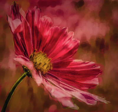 Aster Red Painterly #h1 Art Print