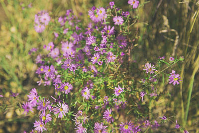 Photograph - Asters In Santa Fe by Kunal Mehra