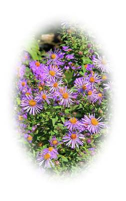 Photograph - Asters Just For You by Valerie Kirkwood