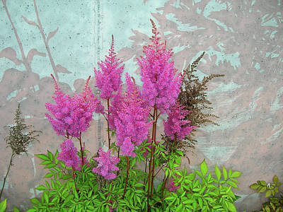 Art Print featuring the photograph Astilbe And Shadows by Randy Rosenberger