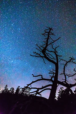 Photograph - Astrophotography Night by James BO  Insogna