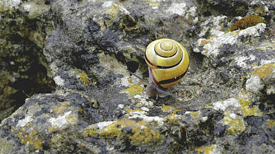 Lichen Photograph - At A Snail's Pace by Rona Black