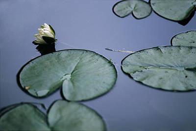 Photograph - At Claude Monet's Water Garden 2 by Dubi Roman