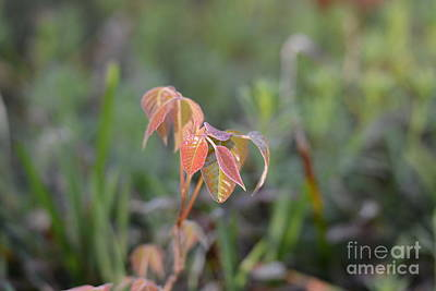Photograph - At First Light by Maria Urso