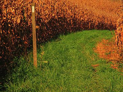 Photograph - At Goes Through Corn Farm by Raymond Salani III