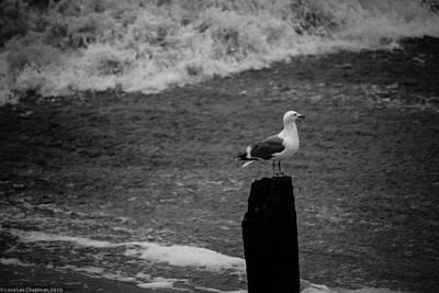 Photograph - At His Post by Lora Lee Chapman