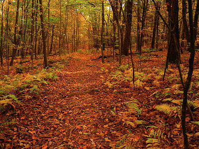 Photograph - At In Autumn In Pa by Raymond Salani III