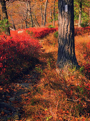 Photograph - At In Harriman State Park by Raymond Salani III