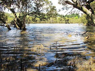 Photograph - At Muddy Shady Mangroves 2 by Dianne  Connolly