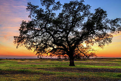 Photograph - An Oak At Sunset by James Eddy